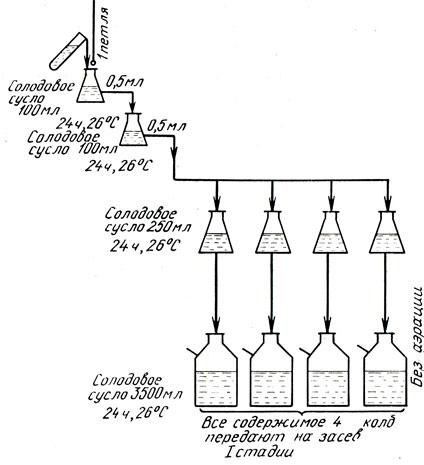 Схема выращивания маточных